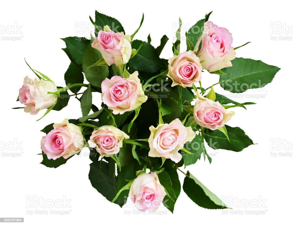 White And Pink Rose Flowers Bouquet Stock Photo More Pictures Of
