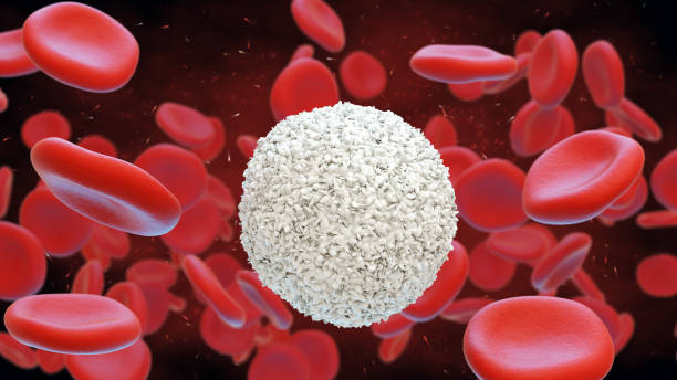 White and red blood cells. Leukocytes.  3d illustration. stock photo