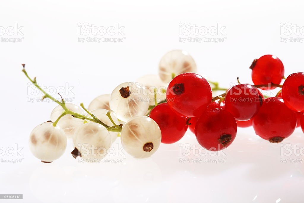 white and red currants royalty-free stock photo