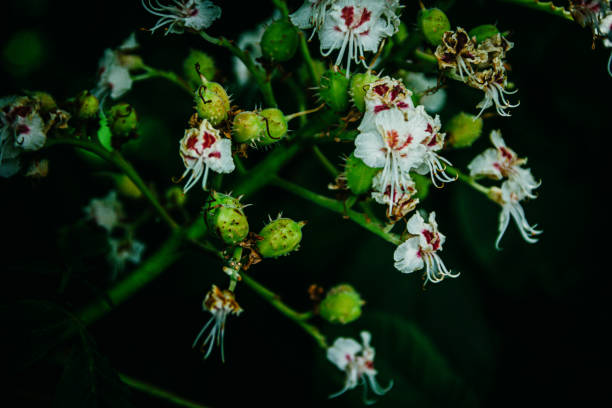 White and red flowers on a fruit tree stock photo