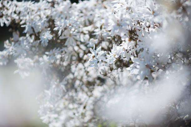weiß und zart – Foto