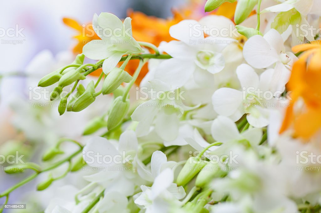 White and yellow orchids with chrysanthemum foto stock royalty-free