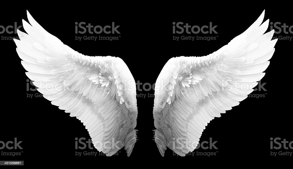 white angel wing isolated stok fotoğrafı