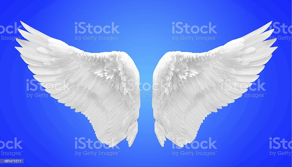 white angel wing isolated royalty-free stock photo