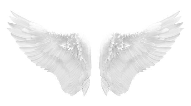 white angel wing isolated - animal wing stock photos and pictures