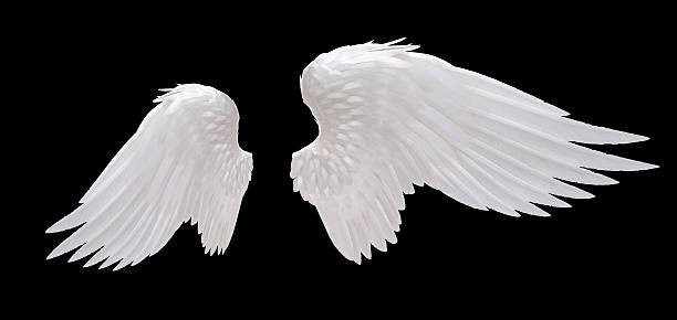 white angel wing stock photo