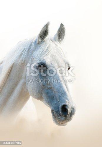 White arabian horse portrait, vertical
