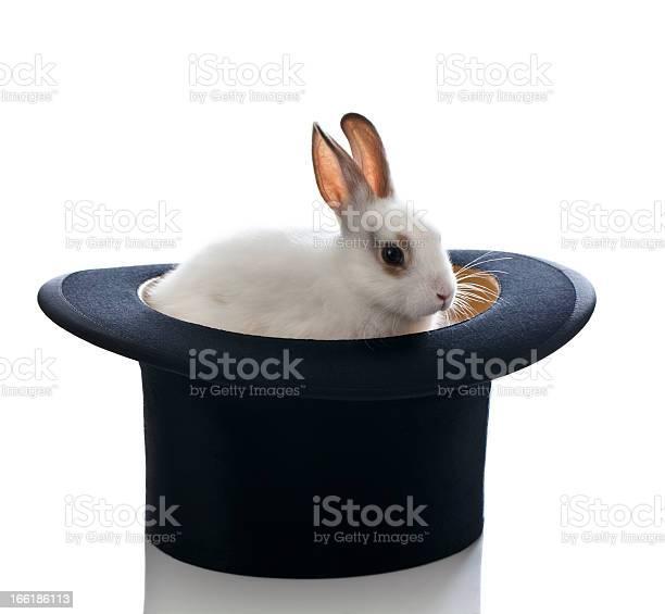 White baby bunny and top hat picture id166186113?b=1&k=6&m=166186113&s=612x612&h=ijrtj1fbarhowdbt0a4nycfn3nhjvz2lqfkelpuy7ds=