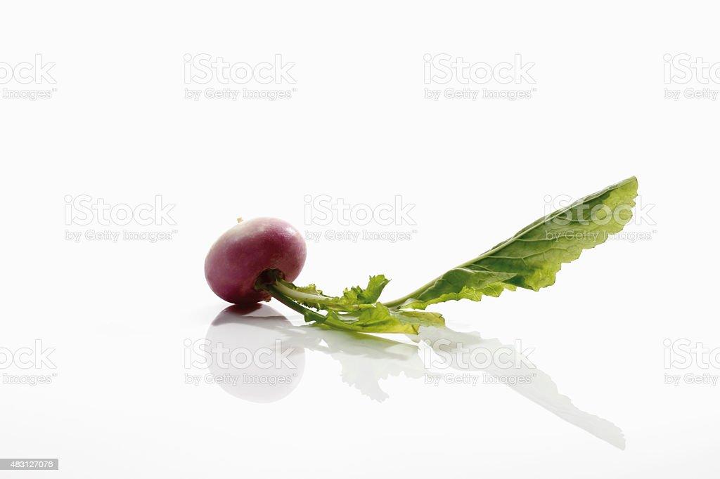White baby turnip on white background stock photo