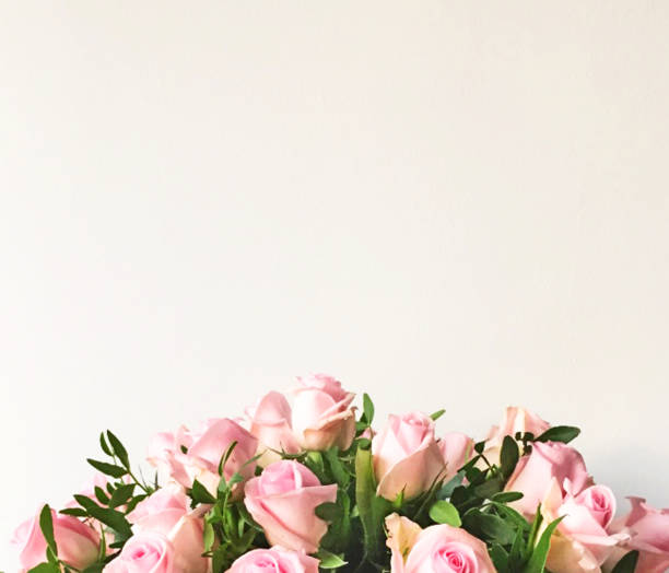 white background and frame with bouquet of pink roses - bouquet stock photos and pictures