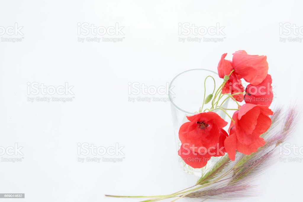 White background with empty place for inscription with red poppies in a transparent glass on a white sheet with wheat ears stock photo