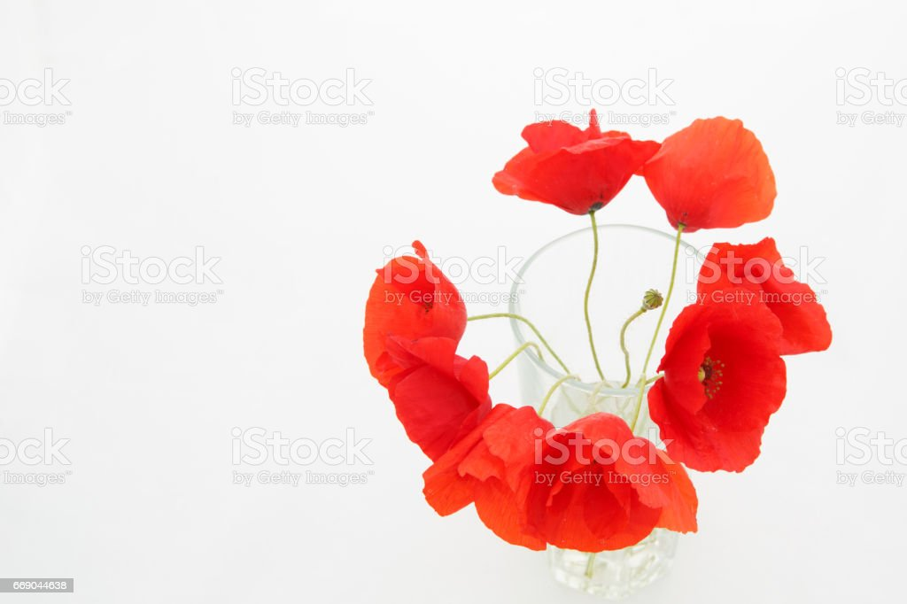 White background with empty place for inscription with  red poppies in a transparent glass stock photo