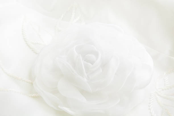 White background with gentle rose close up from textile rosetexture picture id695999182?b=1&k=6&m=695999182&s=612x612&w=0&h=ujyoifuggqvue8uu7wei4df4wmvvgywhcqu3yyhe91m=