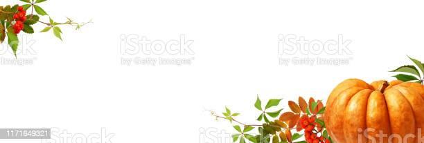 White background with large orange pumpkin rowanberries and green picture id1171649321?b=1&k=6&m=1171649321&s=612x612&h=eliay6kivrmbn wvmfuvbgi727tpvczdigorxb1tzt8=