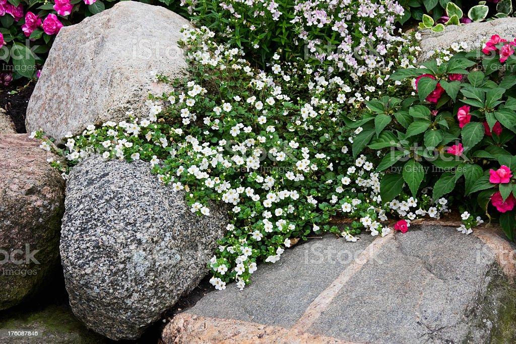Bacopa Et Blanc Avec Impatience Au Jardin Zen Photos Et Plus D
