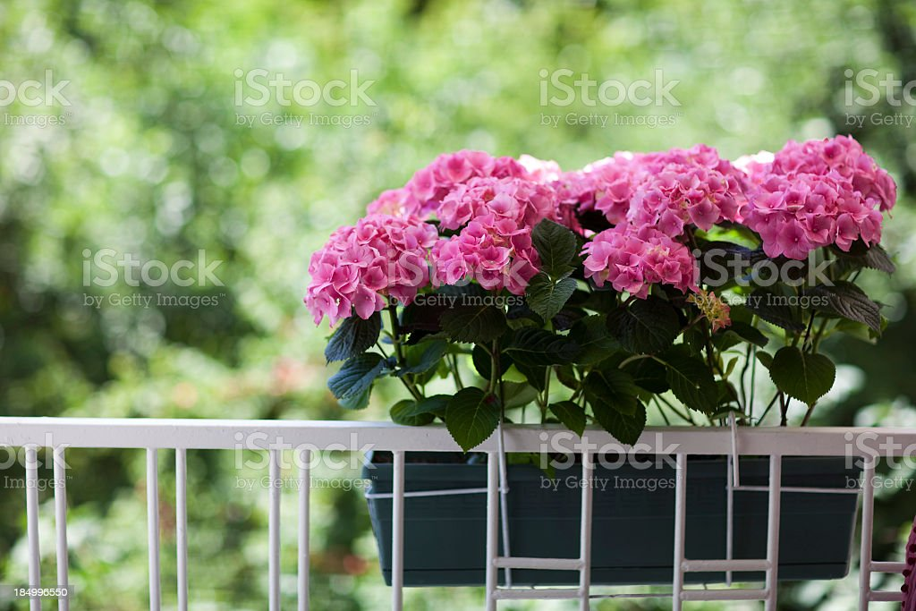 White balcony decorated with a bunch of pink flowers stock photo