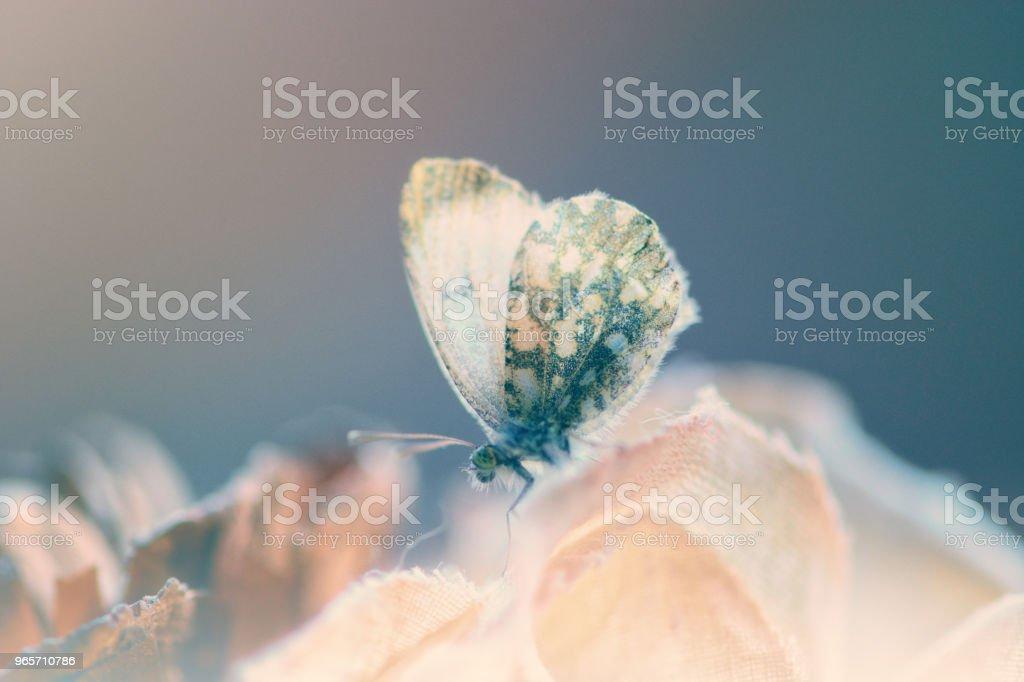 White ballerina on a flower - Royalty-free Animal Stock Photo