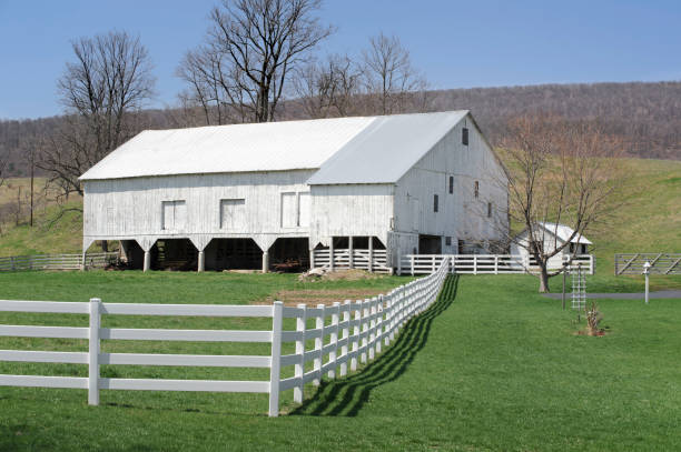 White Barn and Green Grass, Early Spring stock photo