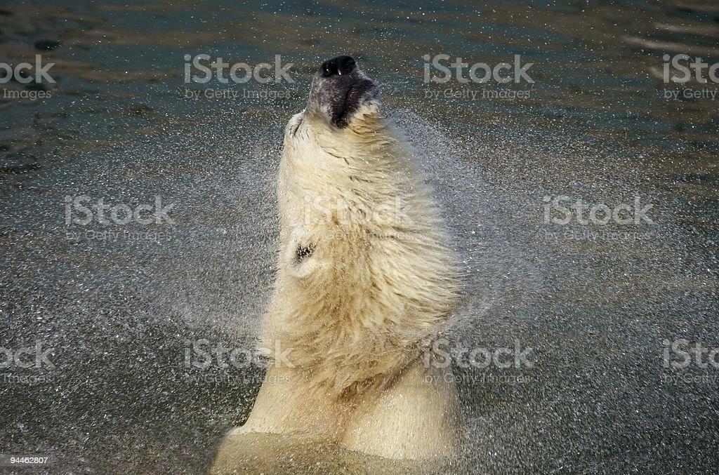 White bear royalty-free stock photo