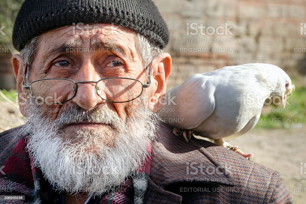 White Bearded Grandfather and Pigeons friendly. royalty-free stock photo