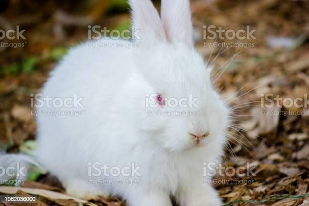 White beautiful bunny picture id1082036000?b=1&k=6&m=1082036000&s=612x612&h=6w76  orracpdqx43pyylyup1vwfyj8u50ffhtbfxyu=