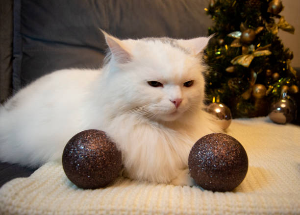 White beautiful cat with green eyes lies on a gray scarf on the background of a Christmas tree and holiday decorations, festive, wooden ornaments, black balls stock photo