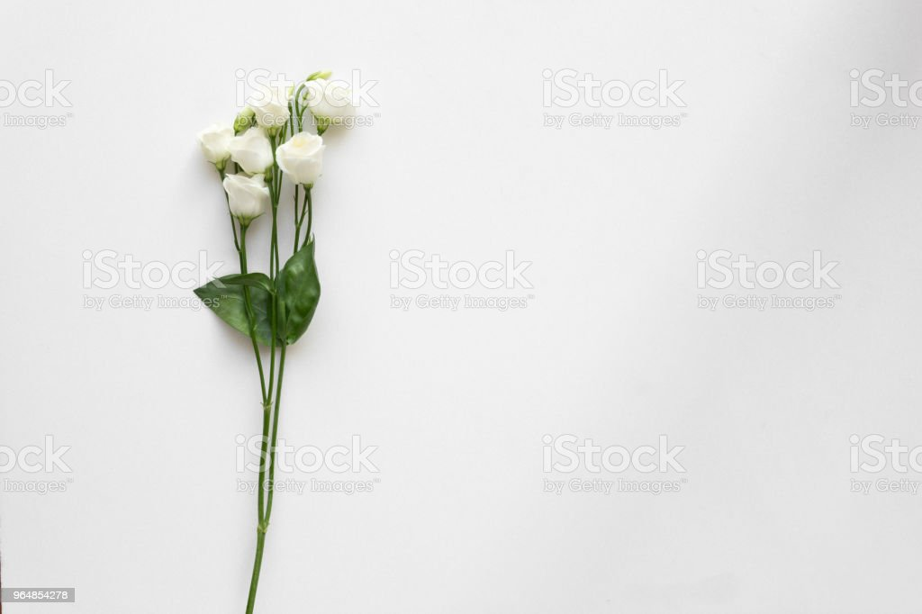 White beautiful roses on white marble. Top View. royalty-free stock photo
