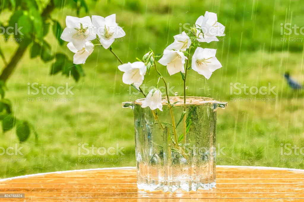 White Bells In A Vase On A Table In The Garden Under A Summer Rain Stock Photo Download Image Now Istock