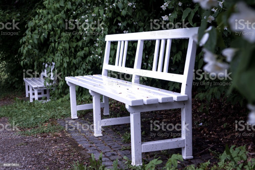 Outstanding White Bench In The Garden With Flowers On Background Stock Photo Download Image Now Ncnpc Chair Design For Home Ncnpcorg
