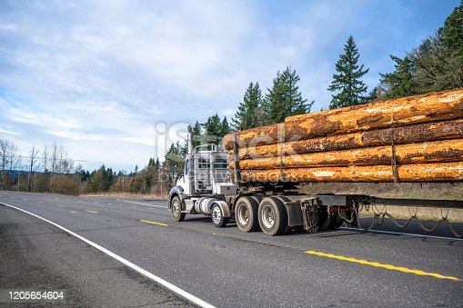 Big rig professional white classic powerful bonnet diesel long haul semi truck transporting a bunch wood tree logs running on the winding road with bare winter nature forest on the hill