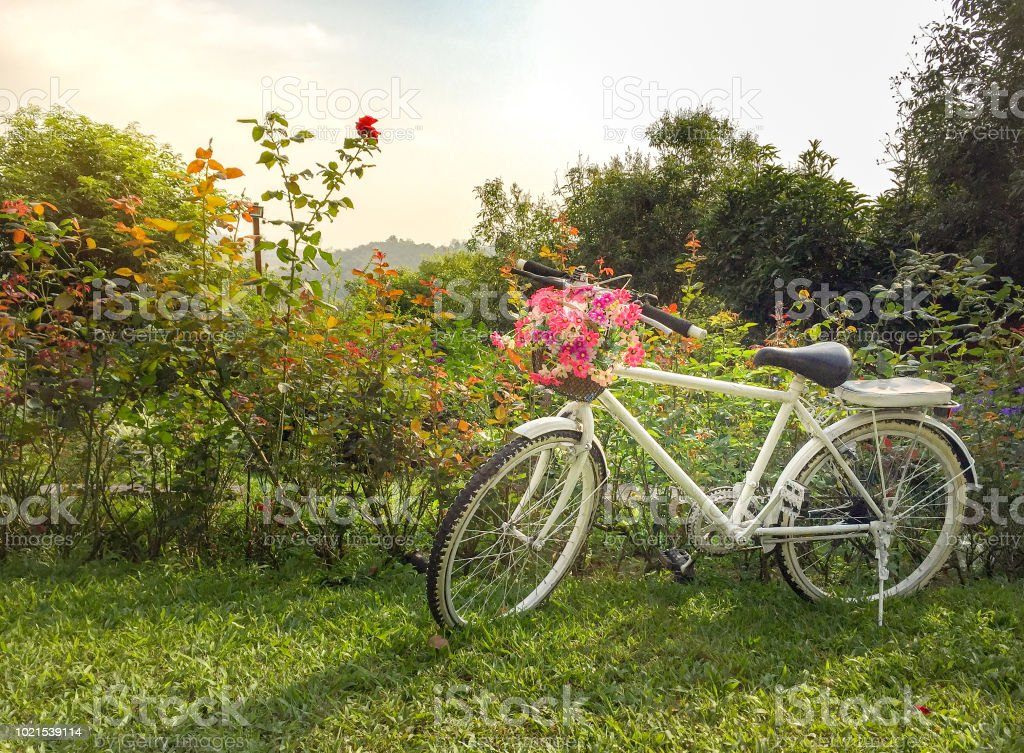 White bike with beautiful flowers in the green garden have sunny стоковое фото