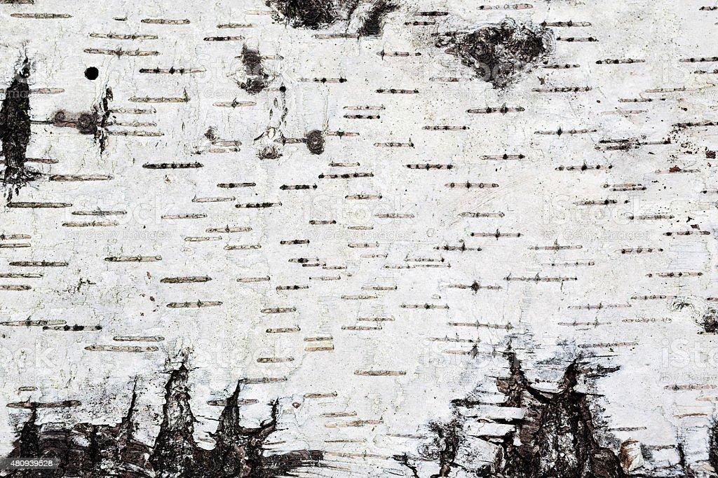 Weiße aus Birkenrinde Hintergrund Textur – Foto