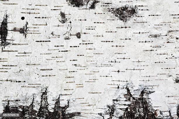 Photo of White birch bark background texture