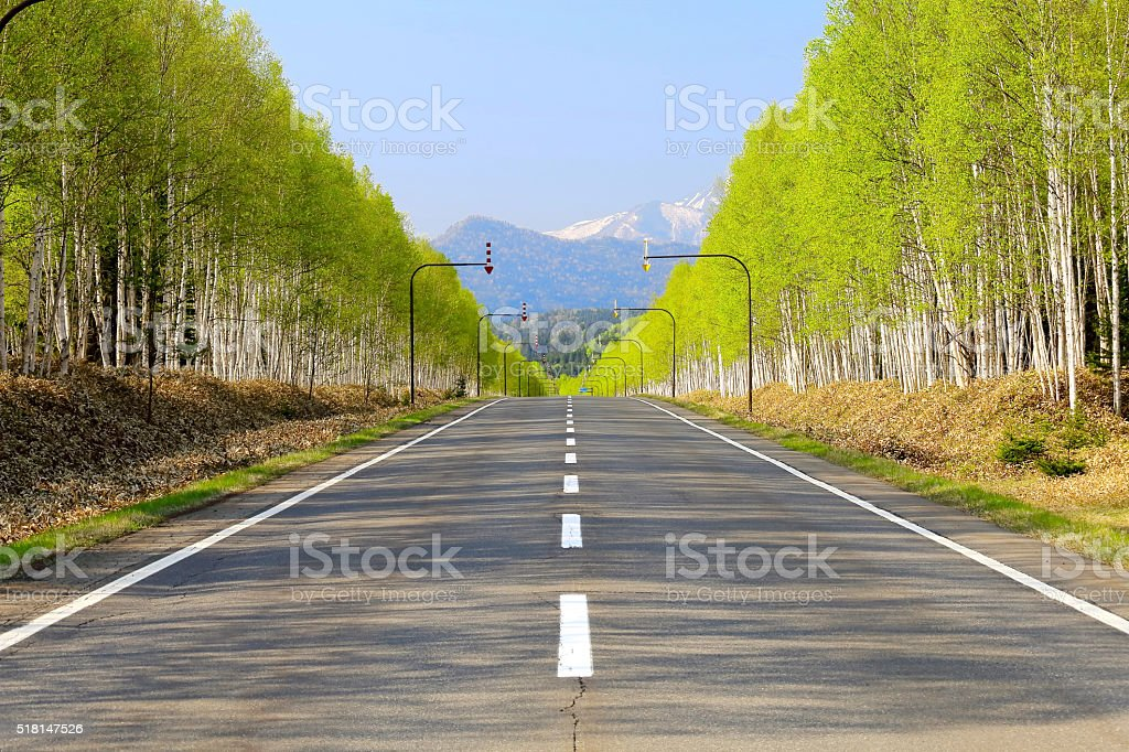 White birch Road at the foot of Mikuni Pass of Hokkaido - Royalty-free Betula pendula Stock Photo
