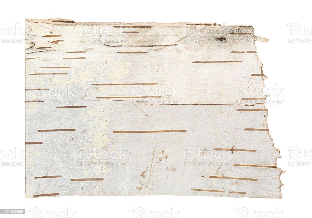 White birch tree bark stock photo