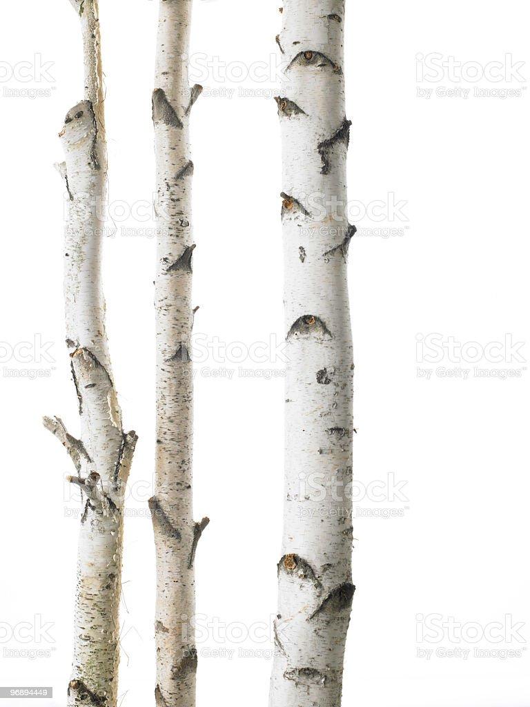White birches triple royalty-free stock photo