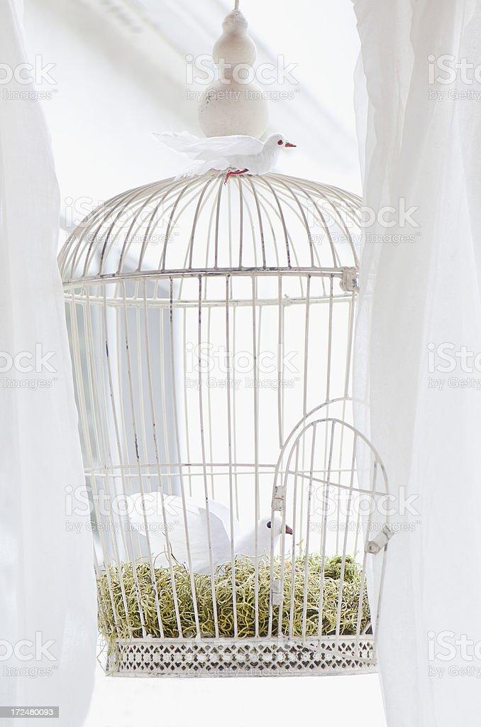 White bird cage royalty-free stock photo