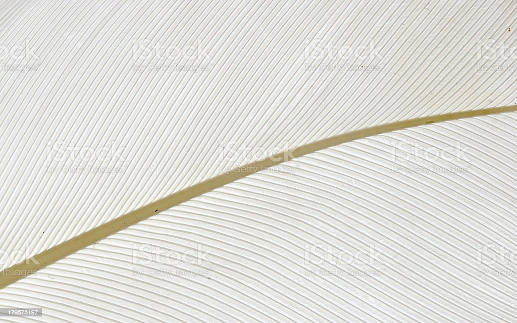 white bird feather background royalty-free stock photo