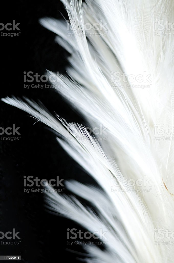 White Bird Feather royalty-free stock photo
