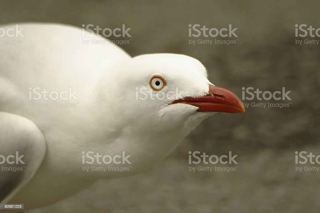 White bird in a crouched position royalty-free stock photo
