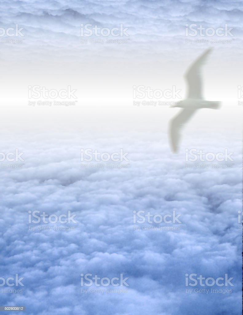 White Bird in Clouds stock photo