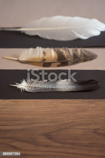 istock White -black bird feather in focus next to two defocused 866987594