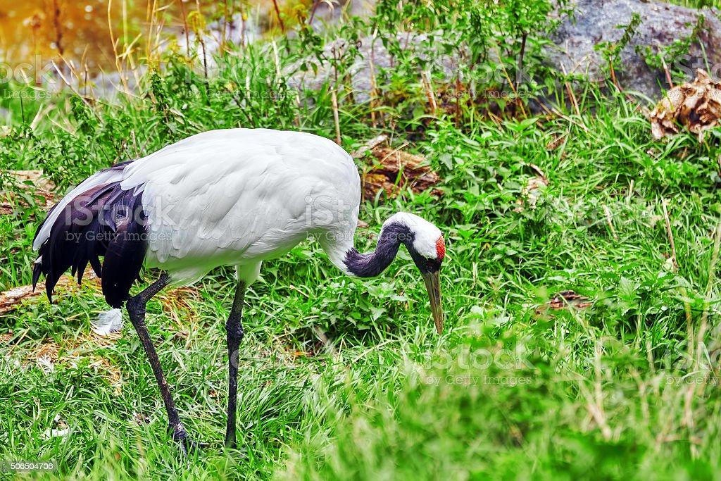 White - black Heron in green bush  in nature. stock photo