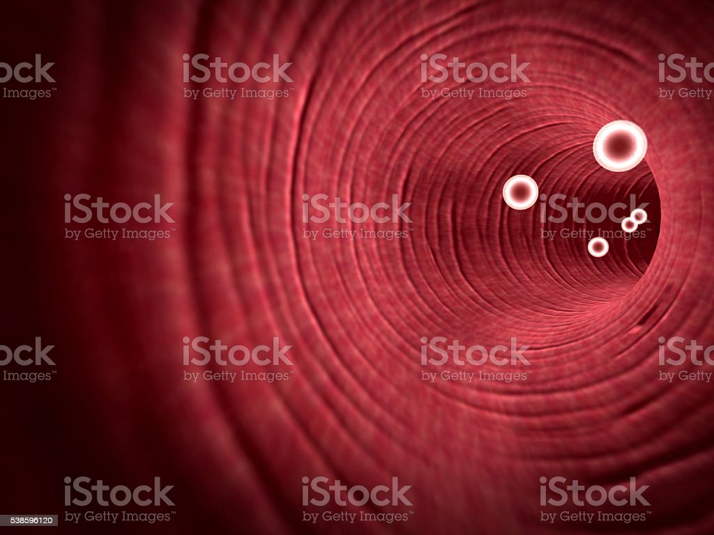 white blood cells inside the blood vessel stock photo