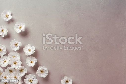 White cherry blossom corner with copy space.