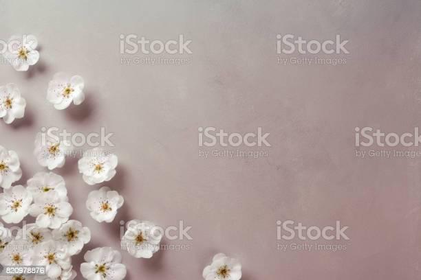 White blossom corner picture id820978876?b=1&k=6&m=820978876&s=612x612&h=ge1kbit6zlnfpw8qsipo1ycsef6b3ef6e vjlhfatfu=