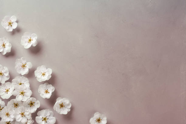 white blossom corner - sakura background stock photos and pictures