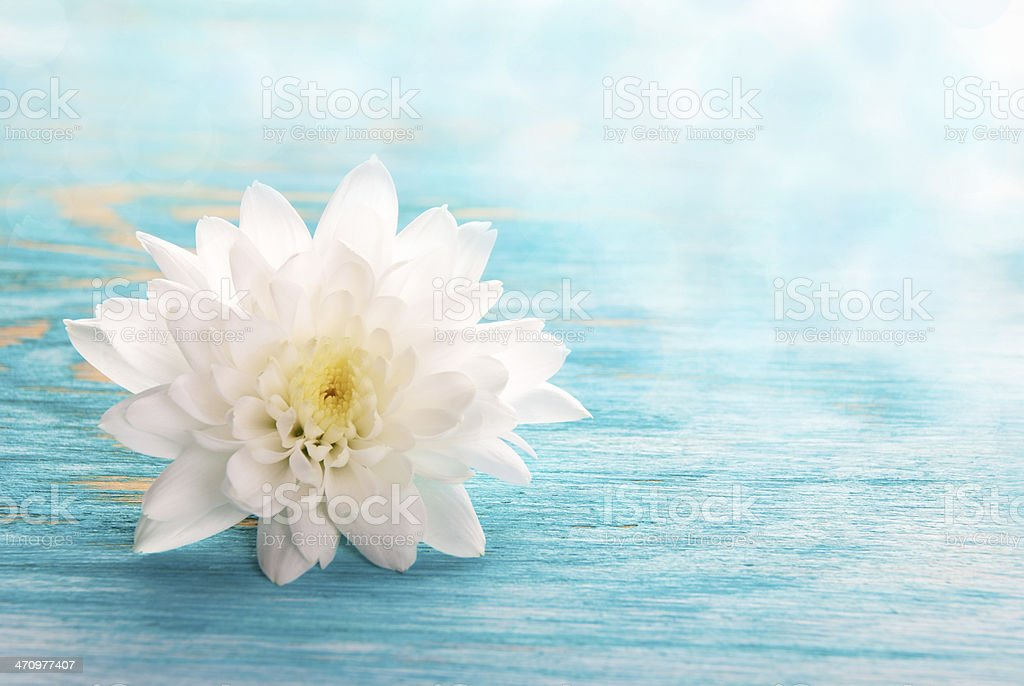 Weiße Blossom – Foto