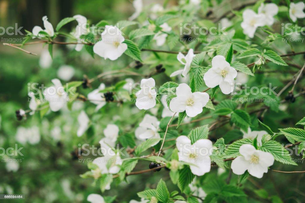 Fleur blanc photo libre de droits