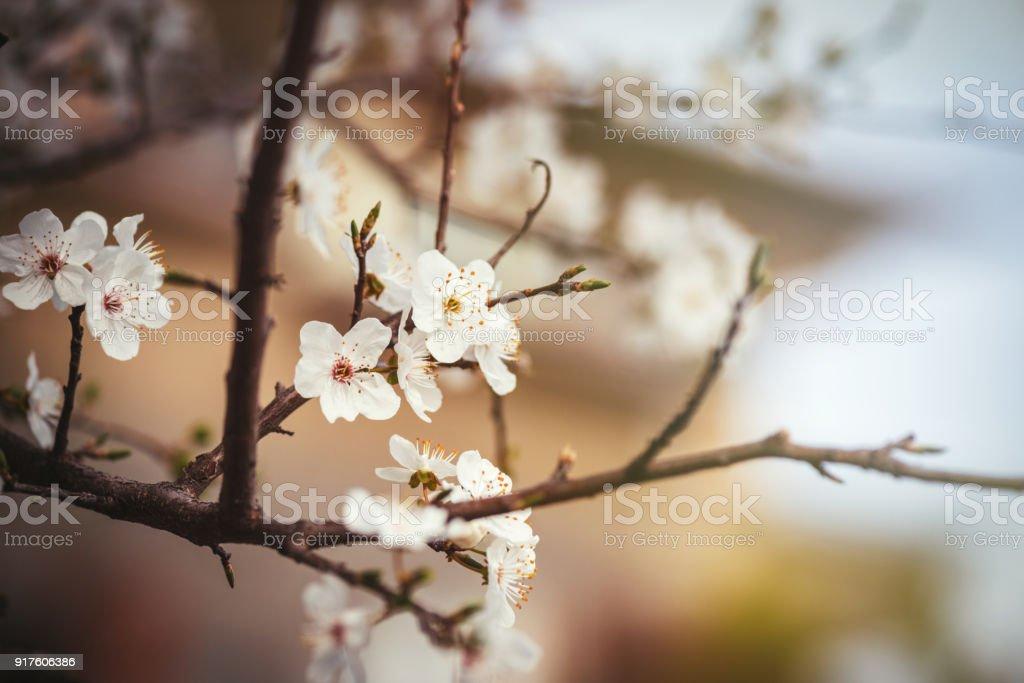 Sprintime 흰 꽃 스톡 사진